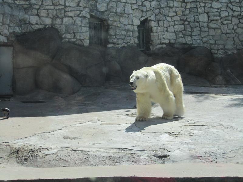 Московский зоопарк,2