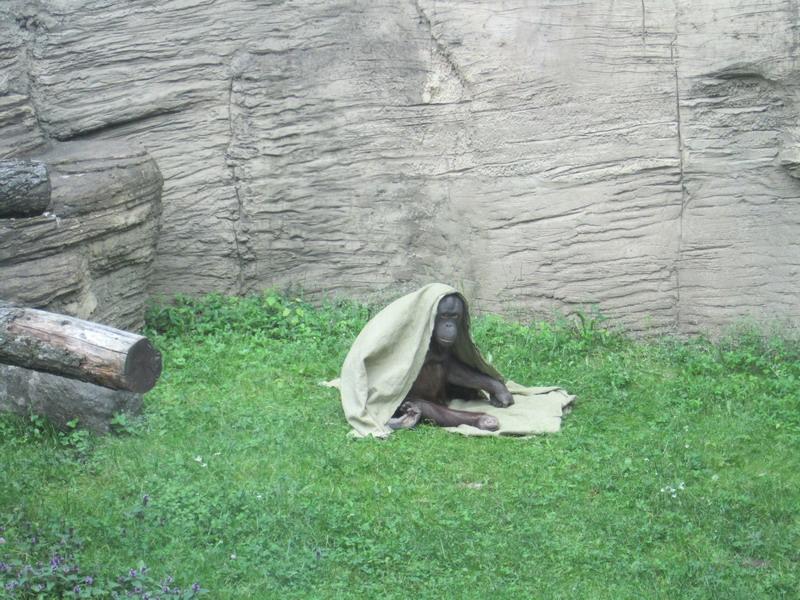 Московский зоопарк,3